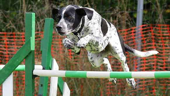 Dog Agility Training Tips
