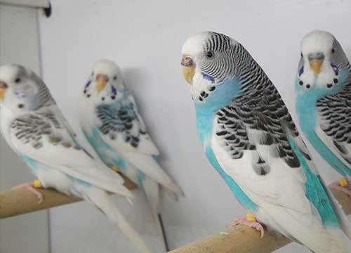 Which Pet is Right for You - How to Take Care of Birds