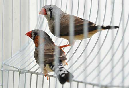 What is the best pet bird for you