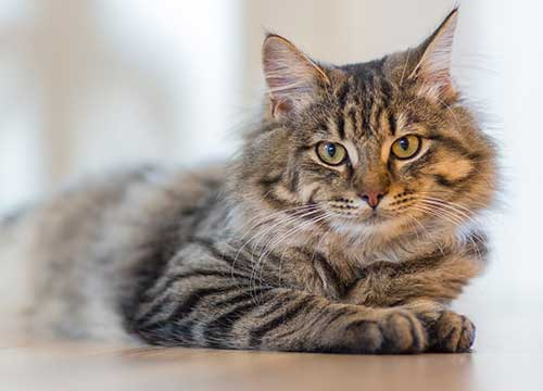 Which Pet is Right for You - Why You Should Get a Cat
