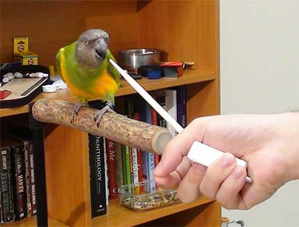 Parrot Training Tips and Tricks