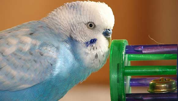 The Best Toys for Your Bird