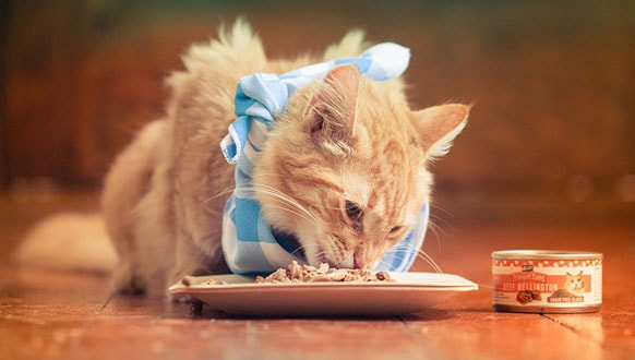 Best Cat Food For Indoor Cats