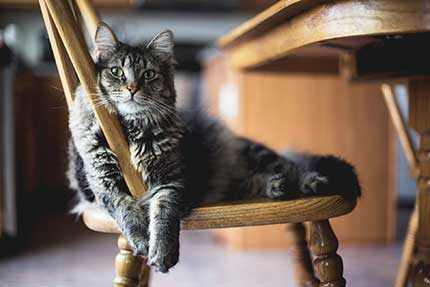 What furniture is best for cats