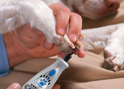 Best Dremel For Dog Nails
