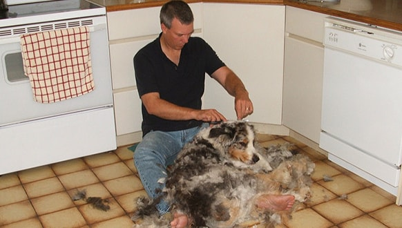 Consider This Before Going Out To Buy Dog Grooming Shears