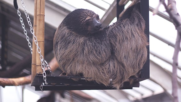 Do sloths make good pets?