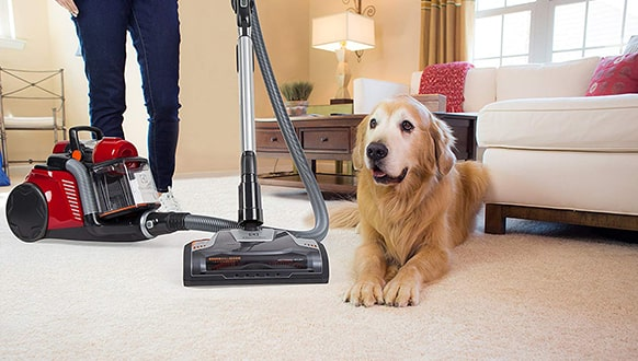 5 ​​​​​Best Canister Vacuum For Pet Hair
