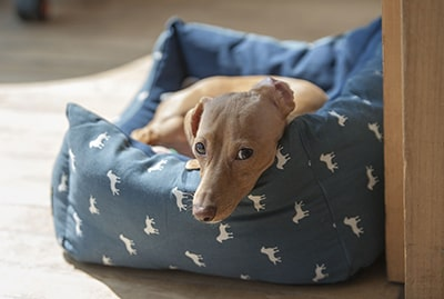 Are Orthopedic Beds Good for Dogs?