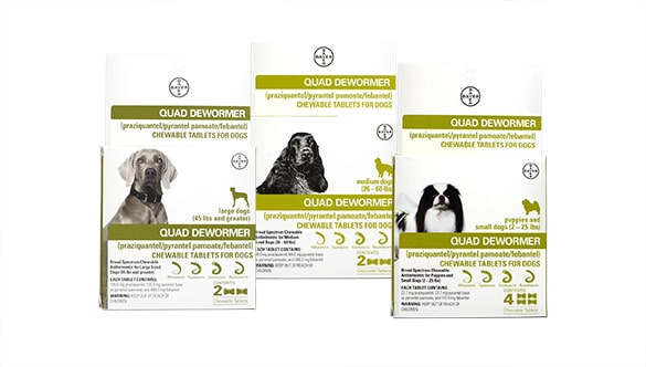 Bayer quad dewormer reviews
