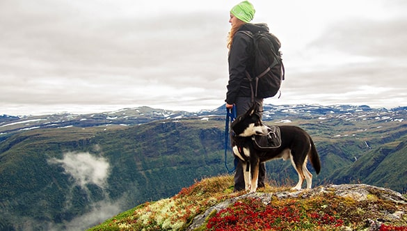 Best dog breeds for hiking off leash