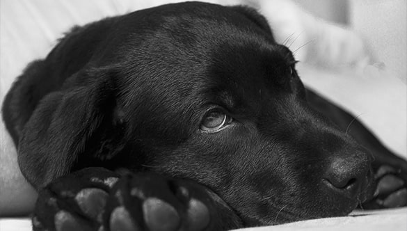 5 Common Signs Your Dog May Be Battling an Illness or Disease
