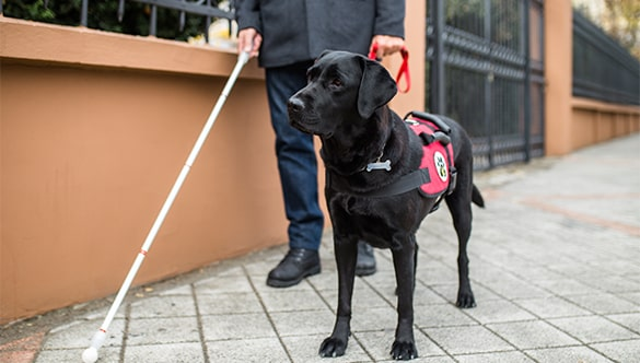 Why You Should Register Your Service Dog or Emotional Support Dog?