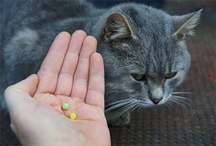 Cat Sleeping Pills For Travel