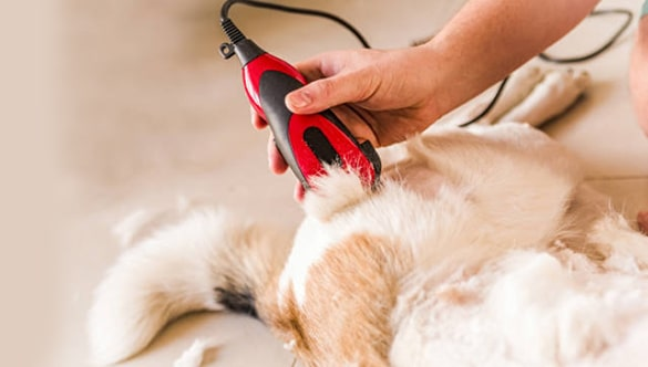 Best clippers for dogs with thick coats